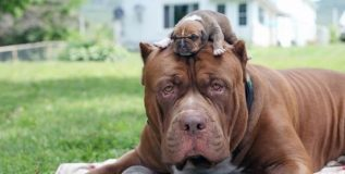 कुत्र्याच्या एका पिल्लाची किंमत चक्क १९ लाख रुपये