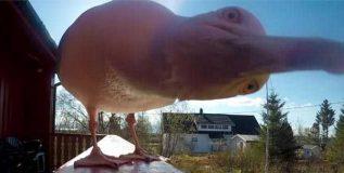पक्ष्याने चोरला कॅमेरा, त्यात ५ महिन्यांनंतर सापडला हैराण करणार व्हिडीओ