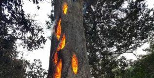 झाड कापताना घडला भलताच प्रकार..!