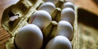 पोलंडने 'या' कारणांमुळे नष्ट केली ४० लाख अंडी