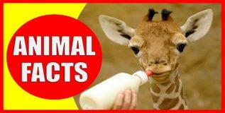 जाणून घेऊया प्राण्यांशी निगडित काही रोचक तथ्ये