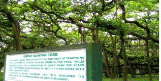 विशालकाय वडाचे हे झाड आहे २५० वर्षांचे
