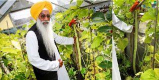 अनोखा विश्वविक्रम; भारतीय शेतकऱ्याने घेतले ५१ इंच लांब काकडीचे उत्पन्न