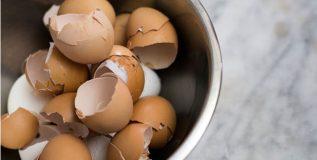 अंड्यांच्या टरफलांचा वापर करून हजारो रुपयांची कमाई