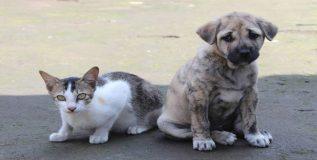 कुत्र्यामांजरांचे मांस खाण्यावर अमेरिकेत बंदी