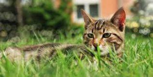 न्यूझीलंडमधील या गावामध्ये लावला जाणार मांजरींवर 'बॅन'!