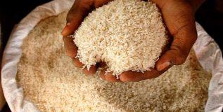 चीनी ड्रॅगनला भात खाऊ घालणार भारत