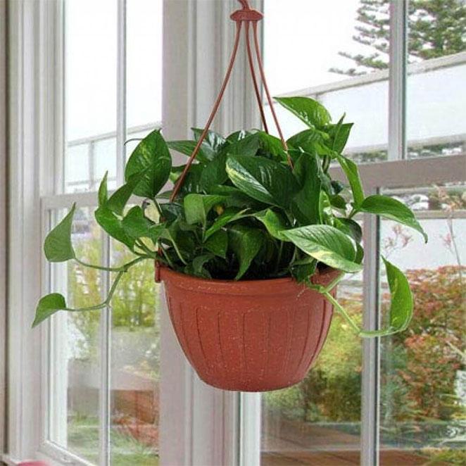money-plant2