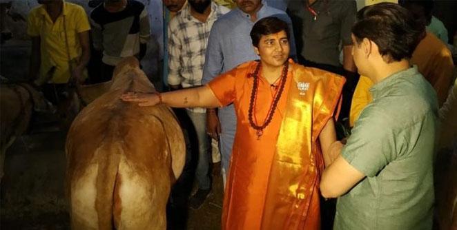 sadhavi-pragya