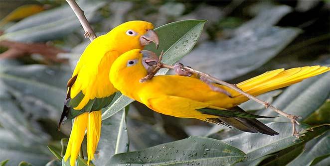 पक्षीही घेतात घटस्फोट