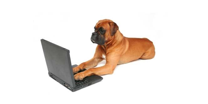 कुत्र्यांसाठी संगणक