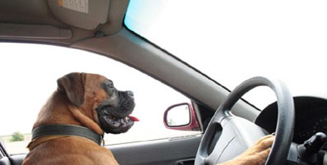 खट्याळ कुत्र्यामुळे मालक संकटात