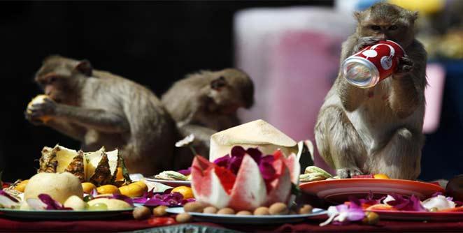 लोपबुरी येथे पार पडली माकडांची मेजवानी