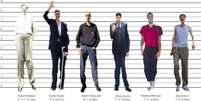 उंचे लोक उंची पसंद